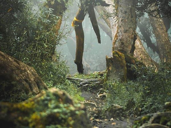 vegetacion derante campo base de annapurna